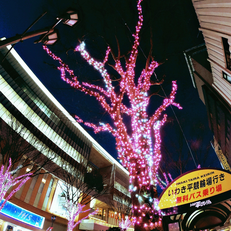 いわき駅前光の桜!